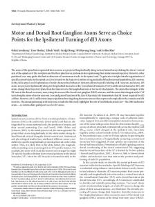 Motor and Dorsal Root Ganglion Axons Serve as ... - Semantic Scholar