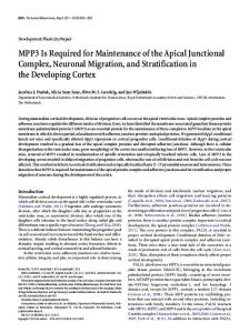 MPP3 Is Required for Maintenance of the Apical Junctional Complex ...