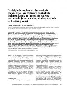 Multiple branches of the meiotic recombination pathway contribute ...