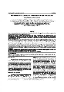 Multiple organs metastatic mesothelioma in a White Tiger
