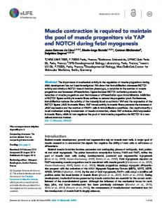 Muscle contraction is required to maintain the pool ... - Semantic Scholar