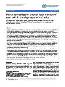 Muscle reorganisation through local injection of stem ... - BioMedSearch
