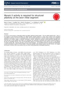 Myosin II activity is required for structural ... - Wiley Online Library