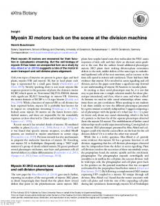 Myosin XI motors: back on the scene at the division