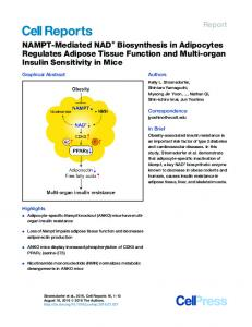 NAMPT-Mediated NAD+ Biosynthesis in Adipocytes Regulates ...