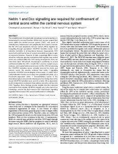 Netrin 1 and Dcc signalling are required for ... - Development