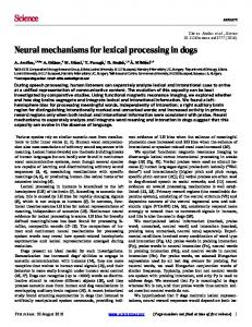 Neural mechanisms for lexical processing in dogs