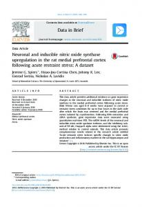 Neuronal and inducible nitric oxide synthase upregulation in the rat