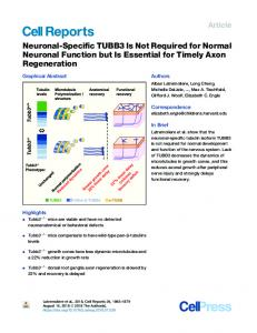 Neuronal-Specific TUBB3 Is Not Required for Normal ... - Cell Press