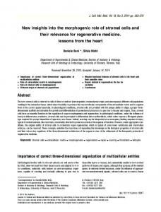 New insights into the morphogenic role of ... - Wiley Online Library