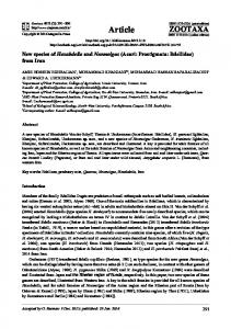 New species of Hexabdella and Neomolgus (Acari ... - Biotaxa