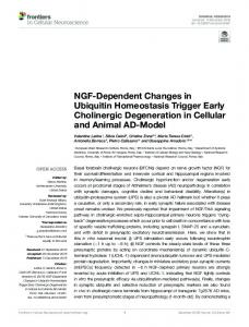 NGF-Dependent Changes in Ubiquitin Homeostasis