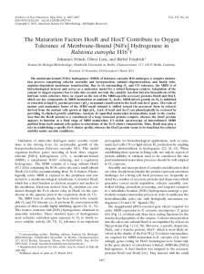 [NiFe] Hydrogenase in Ralstonia eutropha H - Journal of Bacteriology