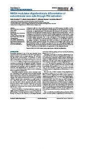 NMDA modulates oligodendrocyte differentiation of ... - ScienceOpen