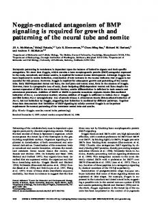 Noggin-mediated antagonism of BMP signaling is required for growth ...