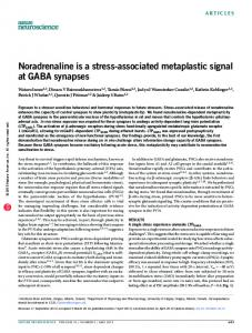 Noradrenaline is a stress-associated metaplastic