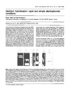 Northern hybridization: rapid and simple ... - BioMedSearch