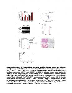 Notch pathway activation in different mouse ... - Semantic Scholar