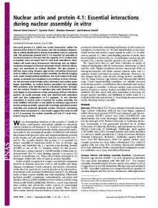 Nuclear actin and protein 4.1 - Semantic Scholar