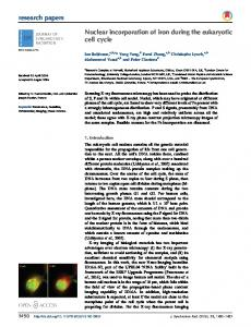 Nuclear incorporation of iron during the eukaryotic cell ... - IUCr Journals