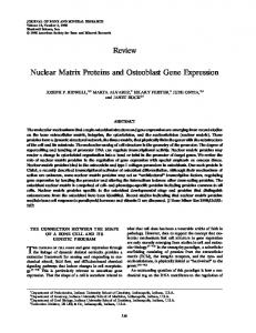 Nuclear Matrix Proteins and Osteoblast Gene ... - Wiley Online Library