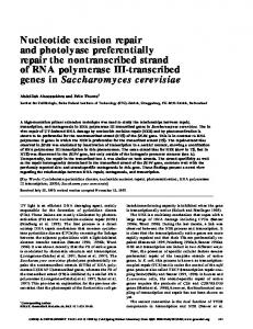 Nucleotide excision repair and photolyase preferentially - Genes ...