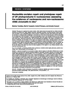 Nucleotide excision repair and photolyase repair of UV photoproducts ...