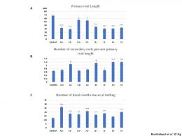 Number of secondary roots per mm primary root length ... - PLOS
