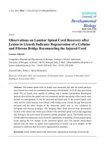 Observations on Lumbar Spinal Cord Recovery after Lesion in Lizards ...