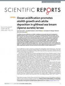 Ocean acidification promotes otolith growth and