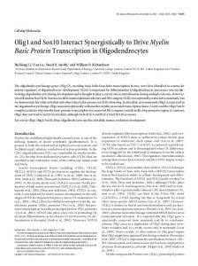 Olig1 and Sox10 Interact Synergistically to ... - Semantic Scholar