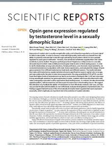 Opsin gene expression regulated by testosterone