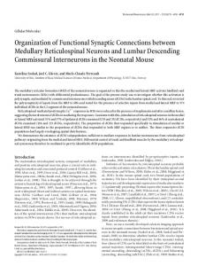 Organization of Functional Synaptic Connections ... - Semantic Scholar