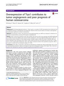 Overexpression of Trps1 contributes to tumor ... - CiteSeerX