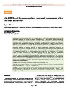 p38 MAPK and the compromised regenerative ...