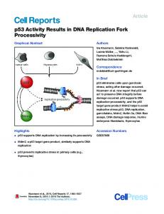 p53 Activity Results in DNA Replication Fork Processivity