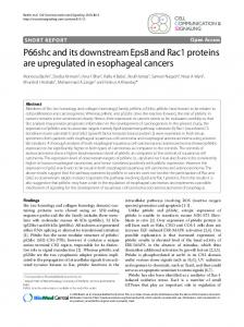 P66shc and its downstream Eps8 and Rac1 proteins are upregulated ...