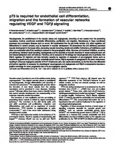 p73 is required for endothelial cell differentiation, migration and the ...
