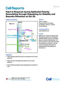 Pak4 Is Required during Epithelial Polarity Remodeling ... - Cell Press