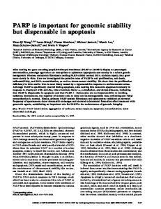 PARP is important for genomic stability but dispensable in ... - DiVA