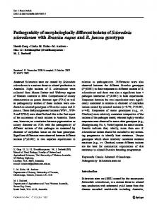 Pathogenicity of morphologically different isolates of Sclerotinia