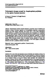 Pathological changes caused by Anoplocephala ... - Springer Link