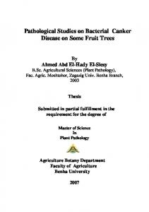 Pathological Studies on Bacterial Canker Disease on