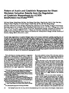 Pattern of Auxin and Cytokinin Responses for Shoot ... - Plant Physiology