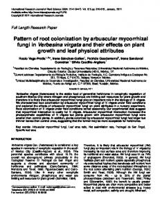 Pattern of root colonization by arbuscular mycorrhizal