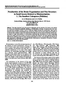 Peculiarities of the Brain Organization and Fine ... - Springer Link