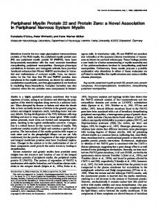 Peripheral Myelin Protein 22 and Protein Zero: a Novel Association in ...