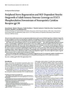Peripheral Nerve Regeneration and NGF-Dependent Neurite ...