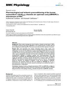 Pharmacological and ischemic preconditioning of the human ...