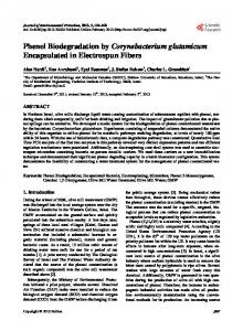 Phenol Biodegradation by Corynebacterium ...